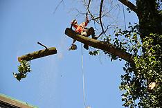Tree Being Cut Down