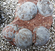 Dinosaur egg from Henau Province, China.