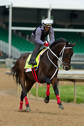 Derby 142 hopeful Majesto with JJ Delgado up were on the track for training, Wednesday, May 04, 2016 at Churchill Downs in Louisville.