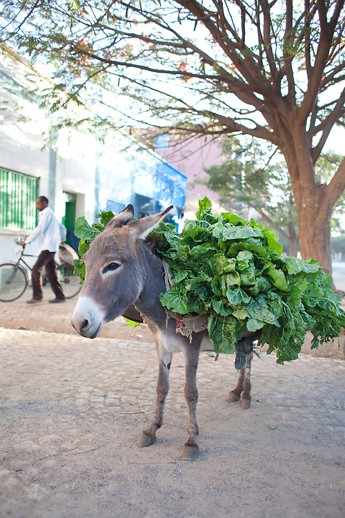 A donkey loaded with chard waits while his owner has a coffee, Axum, Ethiopia