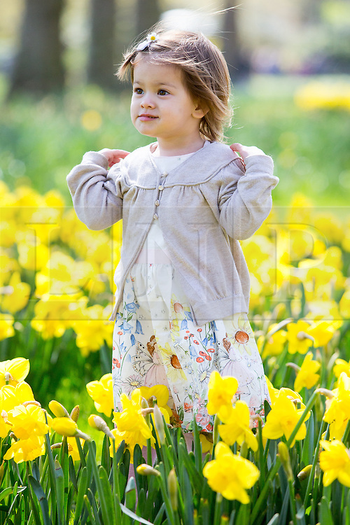 © Licensed to London News Pictures. 20/04/2016. London, UK. Hana, age two, enjoys the warm weather in St James' park, central London. The MET Office predict highs of 13 degrees celsius. Photo credit : Tom Nicholson/LNP
