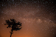 Starry Night. tree silhouetted on a star filled night