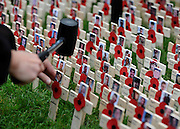 © Licensed to London News Pictures. 10/11/2011. London, UK. The section of crosses with pictures of fallen soldiers from the current Afghanistan conflict. HRH The duke of Edinburgh opens the annual Field of Remembrance at Westminster Abbey today 10 November. . Photo credit : Stephen Simpson/LNP