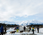 A dog team crosses the Alaska Highway during the biennial Silver Sled dog sledding race in Haines Junction, Yukon on March 4, 2017.