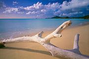 6211-1014C ~ Copyright: George H. H. Huey ~ Driftwood on beach at Valley Church Bay, Near Jolly Harbor. West coast Antigua. Leeward Islands, Lesser Antilles, Caribbean.