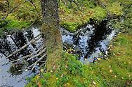 Yli-Vuokki old forest reserve in Suomussalmi, Finland.
