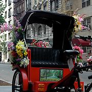 Floral Pedicab