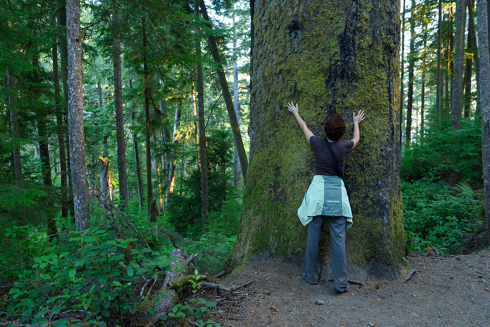 Canada, British Columbia, Vancouver Island, Juan DeFuca Provincal Park, China Beach, woman hugging old growth tree, MR 0009