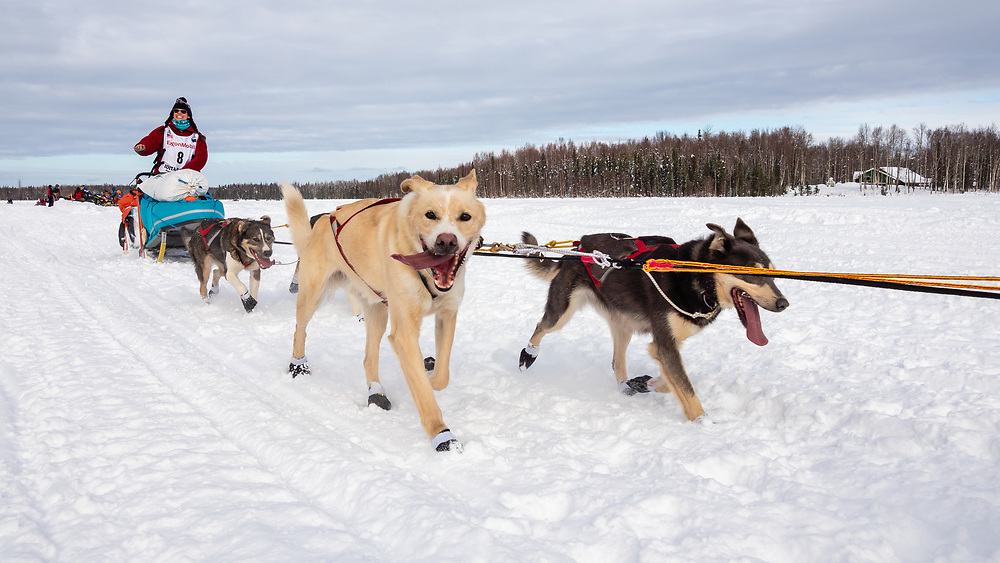 Musher Kristin Bacon after the restart in Willow of the 47th Iditarod Trail Sled Dog Race in Southcentral Alaska.  Afternoon. Winter.