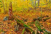 Forest floor in autumn, Rosseau, Ontario, Canada