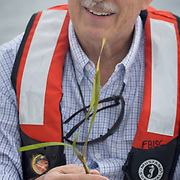 FLORIDA CITY, FLORIDA - APRIL 22, 2016<br /> Robert Johnson, Director of South Florida Natural Resources Center, holds a strand of shoal grass that was floating in the waters of the Everglades National Park  during a trip to look at dying sea grass.<br /> (Photo by Angel Valentin)