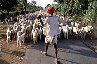 Inde. Rajasthan. Bijaipur. Berger Rabaris. // India. Rajasthan. Bijaipur area. Rabaris shepherds