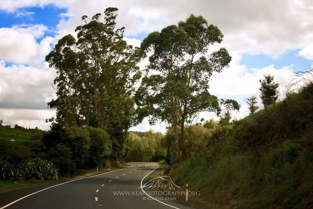 Windy road in Northland, New Zealand