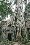 A doorway in Ta Prohm to a temple built in the late 12th and early 13th centuries as a monastery and university. The door is surrounded by silk cotton tree roots encased by strangler figs roots, which develop their own underground root system. They then grow quickly, often strangling the host tree, which in time dies and rots away. The strangler fig continues to exist as a hollow tubular lattice that provides shelter for many forest animals. Siem Reap, Cambodia, 2003