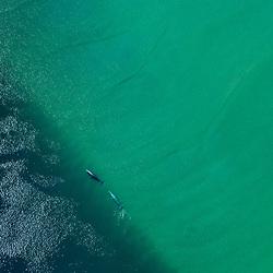Grey whales swimming along a sandbank in Baja California Sur, Mexico