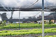 City farming.
