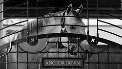 Feature photos and video for Gainesway Farm stallion Anchor Down, Wednesday, July 12, 2017 at Gainesway Farm in Lexington.