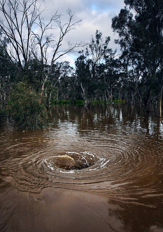 A whirlpool near the levee at Kotupna which had threatened to give way and flood dozens of houses - Pic By Craig Sillitoe 11/09/2010 melbourne photographers, commercial photographers, industrial photographers, corporate photographer, architectural photographers, This photograph can be used for non commercial uses with attribution. Credit: Craig Sillitoe Photography / http://www.csillitoe.com<br />