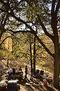 Visitors to Madera Canyon enjoy a picnic and Fall colors in the Santa Rita Mountains, a Sky Island in the Coronado National Forest, Sonoran Desert, Arizona, USA.  Sycamore trees show their autumn color along the seasonal flowing Madera Creek.