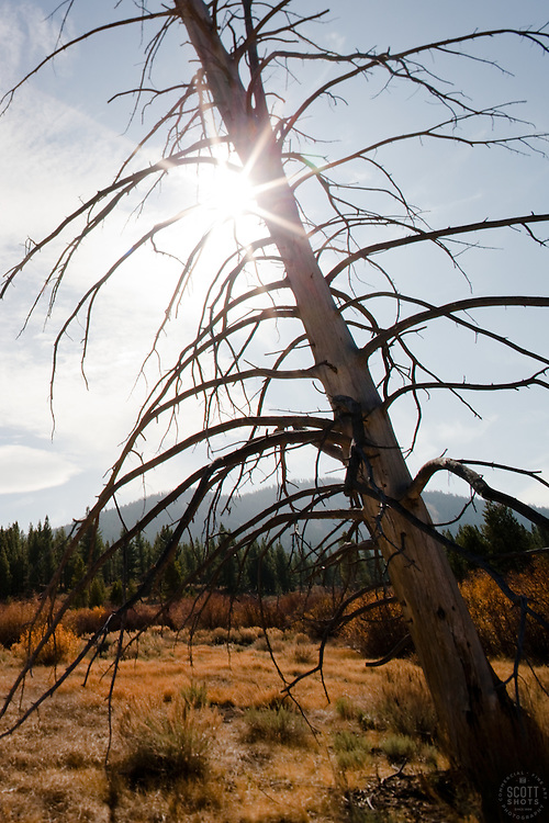 """Tree in Martis Valley"" - This dead tree was photographed in the Martis Valley, in Truckee, CA."