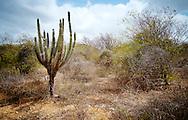 Cactus, Curaçao 2014
