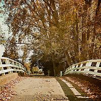 Fallen autumn leaves on a bridge