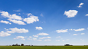 Green early crop  field under blue sky with cumulus clouds near Jimbour Queensland, Australia <br />