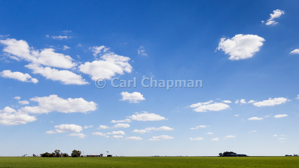 Green early crop  field under blue sky with cumulus clouds near Jimbour Queensland, Australia