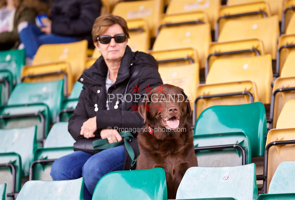 NEWPORT, WALES - Sunday, September 24, 2017: A Wales supporter and her brown dog watch from the stands during an Under-16 International friendly match between Wales and Gibraltar at the Newport Stadium. (Pic by David Rawcliffe/Propaganda)