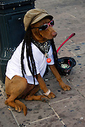 A rasta dog relaxes in Downtown Austin, June 12 2007.