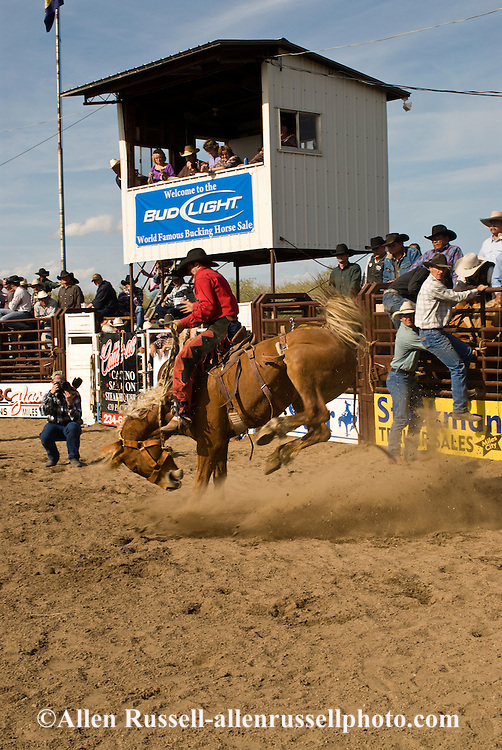 Rodeo, Saddle Bronc rider, Miles City Bucking Horse Sale, Montana, <br /> MODEL RELEASED on rider only