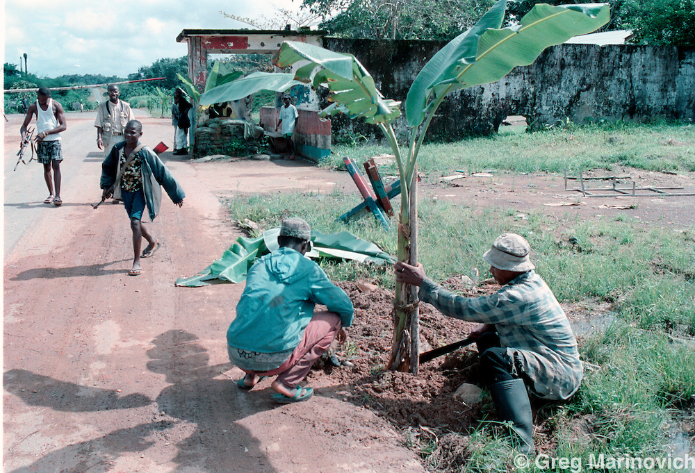 IPMG0907 Bo Waterfront, Liberia. A child soldier loyal to Sekouh Conneh Jr's LRD rebels mans a roadblock on the road between Monrovia and the border crossing with Sierra leone at Bo Waterfront, Sept 22, 2003. A civilian plants a banana tree as a sign of welcome for the rebel leader's pending visit to Monrovia. Liberia's decades long civil conflict has destabilised the entire region and turned a generation of youth into fighters.  Greg Marinovich/South Photographs