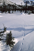 Track in snow, Beaver Lodge, Winter, snow, Denali National Park, Alaska