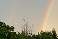 Scotchtown, New York - Double rainbows arc across the sky after a thunderstorm on Aug. 5, 2012. The secondary and dimmer rainbow is on the left side of the frame and has its colors reversed from the primary rainbow.
