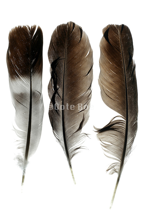 three different bird feathers