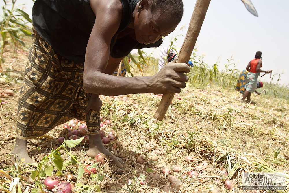 Women work in an onion field in the village of Boalin, Pateau-Centre region, Burkina Faso on Tuesday March 27, 2012.