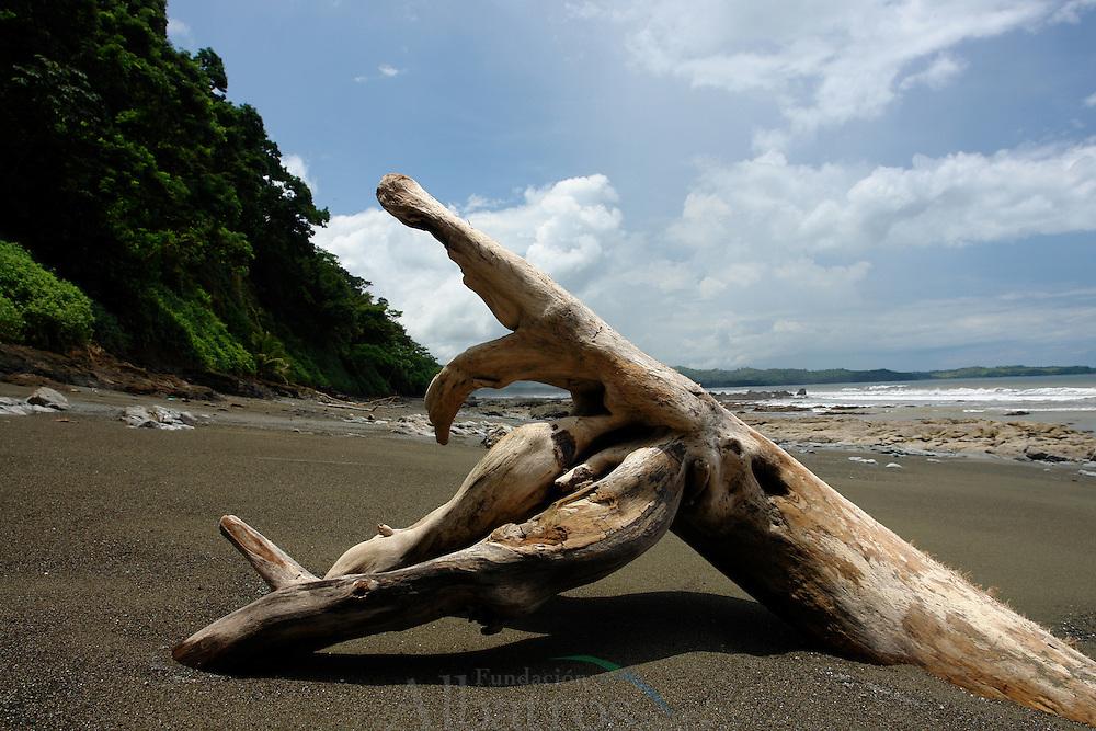 Playa Malena, Veraguas, Panam&aacute;.<br /> <br /> &copy; Alejandro Balaguer/ Fundaci&oacute;n Albatros Media.