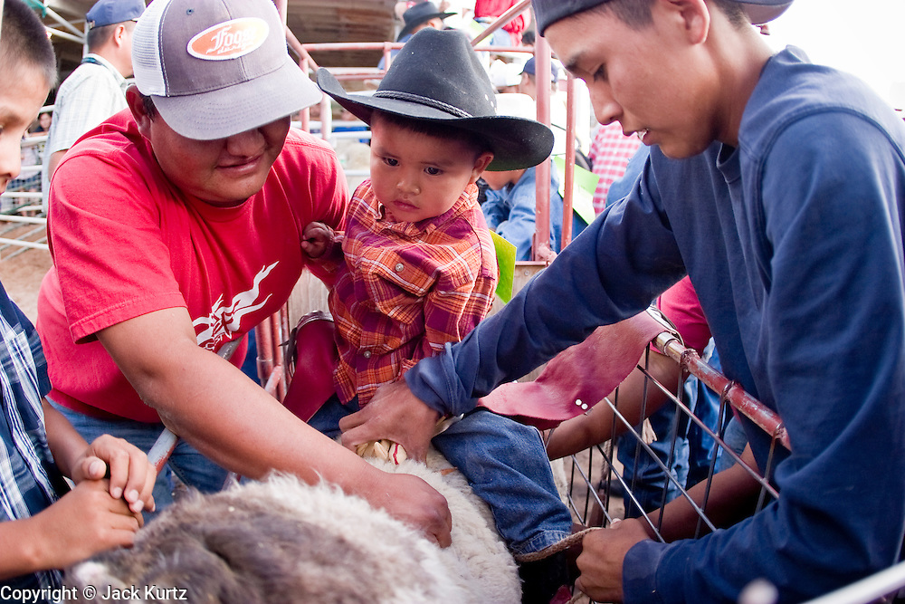 "10 SEPTEMBER 2004 - WINDOW ROCK, AZ: Men help a youngster get set for the ""Wooly Ride"" at the 58th annual Navajo Nation Fair in Window Rock, AZ. The Navajo Nation Fair is the largest annual event in Window Rock, the capitol of the Navajo Nation, the largest Indian reservation in the US. The Navajo Nation Fair is one of the largest Native American events in the United States and features traditional Navajo events, like fry bread making contests, pow-wows and an all Indian rodeo. The Wooly Ride, also called Mutton Busting, is a rodeo for children six years old and younger. The youngsters are set on a sheep which is then turned loose in the arena. Points are awarded for style and length of ride. Wooly Riding is extremely popular on the Navajo reservation, which has a strong cattle and sheep ranching tradition.  PHOTO BY JACK KURTZ"