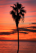 Palm Tree Silhouettes with a Red and Orange Sky Sunset