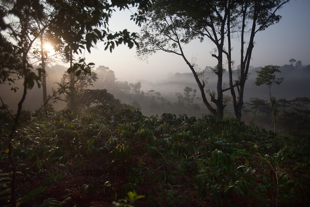 A general view of Robusta coffee plantations in Coorg, India,  on Sunday January 31, 2010. Photographer: Prashanth Vishwanathan/Bloomberg News