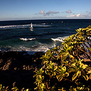 Wind surfers find the north shore of Maui perfect on a beautiful Autumn Hawaii day.