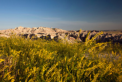 General view of wild flowers in front of large rock formations, Badlands National Park, South Dakota, United States of America