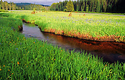 Glade Creek and Packer Meadows. Clearwater National Forest, Idaho