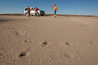 DOG TRACKS IN THE SAND WITH A QUAIL HUNTING PARTY IN THE BACKGROUND