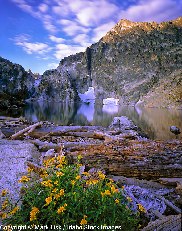 Wild Daisys adorn the outlet of Goat Lake in the Sawtooth National Forest.