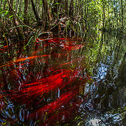 Sabangau Peat-Swamp Forest