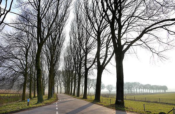 Nederland, Ooijpolder, 28-2-2013Een weg met aan weerszijden bomen. Bomenrij.Foto: Flip Franssen/Hollandse Hoogte