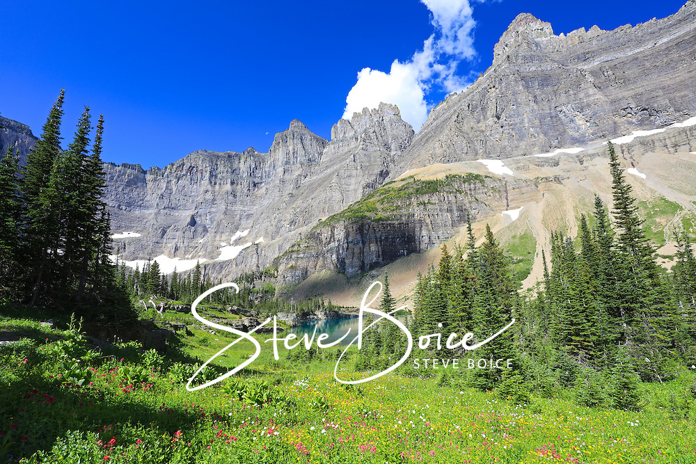 Iceberg Lake Trail and wildflower meadow in Glacier National Park, Montana