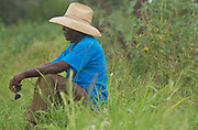 """mkb081517/metro/Marla Brose --  Mtendji Jackson Wilondja, mows grass between the rows of vegatables at Tres Hermanas Farm, August 15, 2017. Wilondja, originally from Congo, via a refugee camp in Tanzania, where he lived and raised a family for 20 years.  """"Albuquerque is good,"""" he said.  (Marla Brose/Albuquerque Journal)"""
