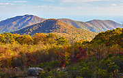Autumn colors with Old Rag Mountain in the background
